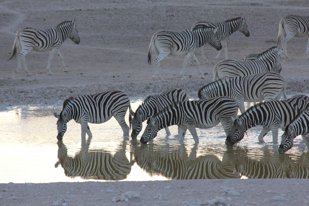 Travel-Destination-Botswana-HOME